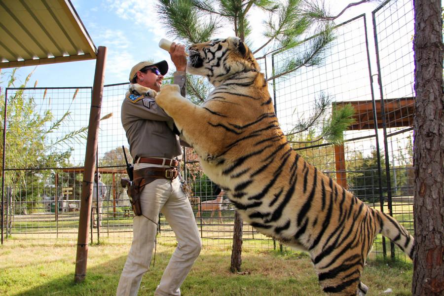 tiger king tweede seizoen