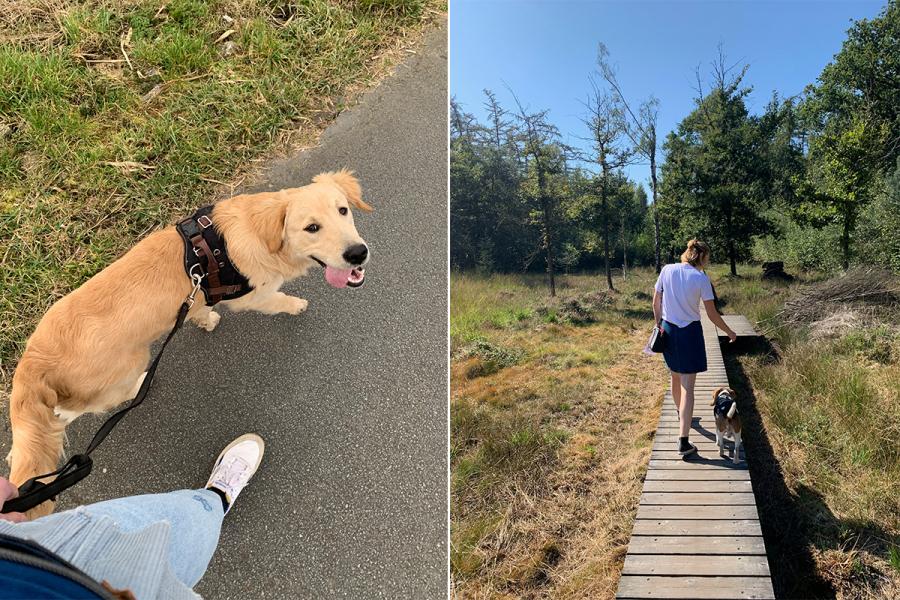 Wandelingen hond