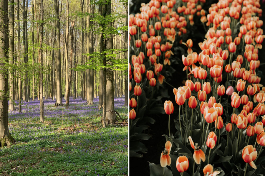 bloemenvelden belgie