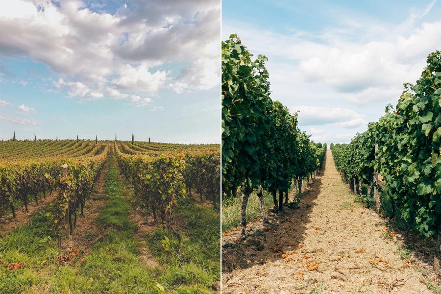 fietsroute wijngaarden
