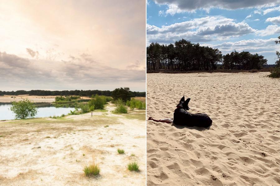 zandvlaktes België