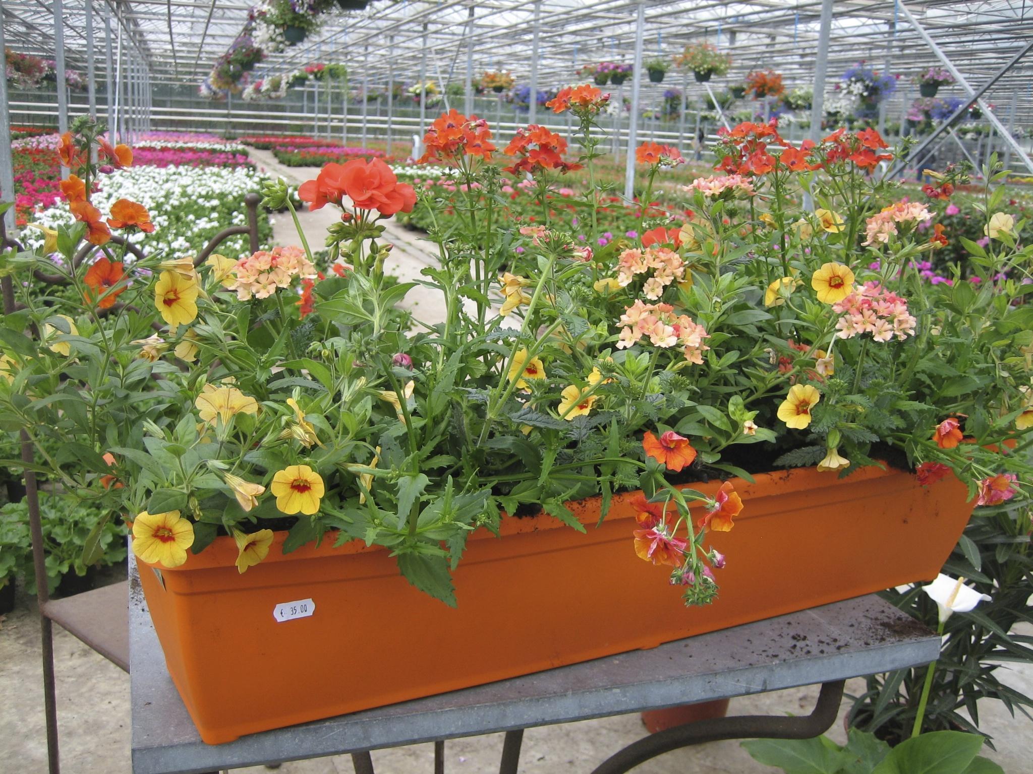 Comment Arroser Mes Plantes Pendant Les Vacances trucs pour que vos jardinières restent belles pendant vos