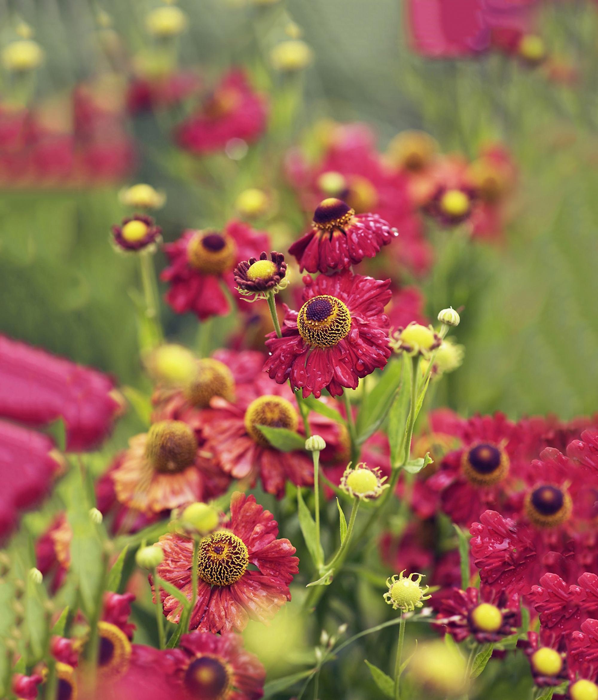 Quelles Fleurs Planter Fin Aout 6 jolies fleurs d'automne - femmes d'aujourd'hui