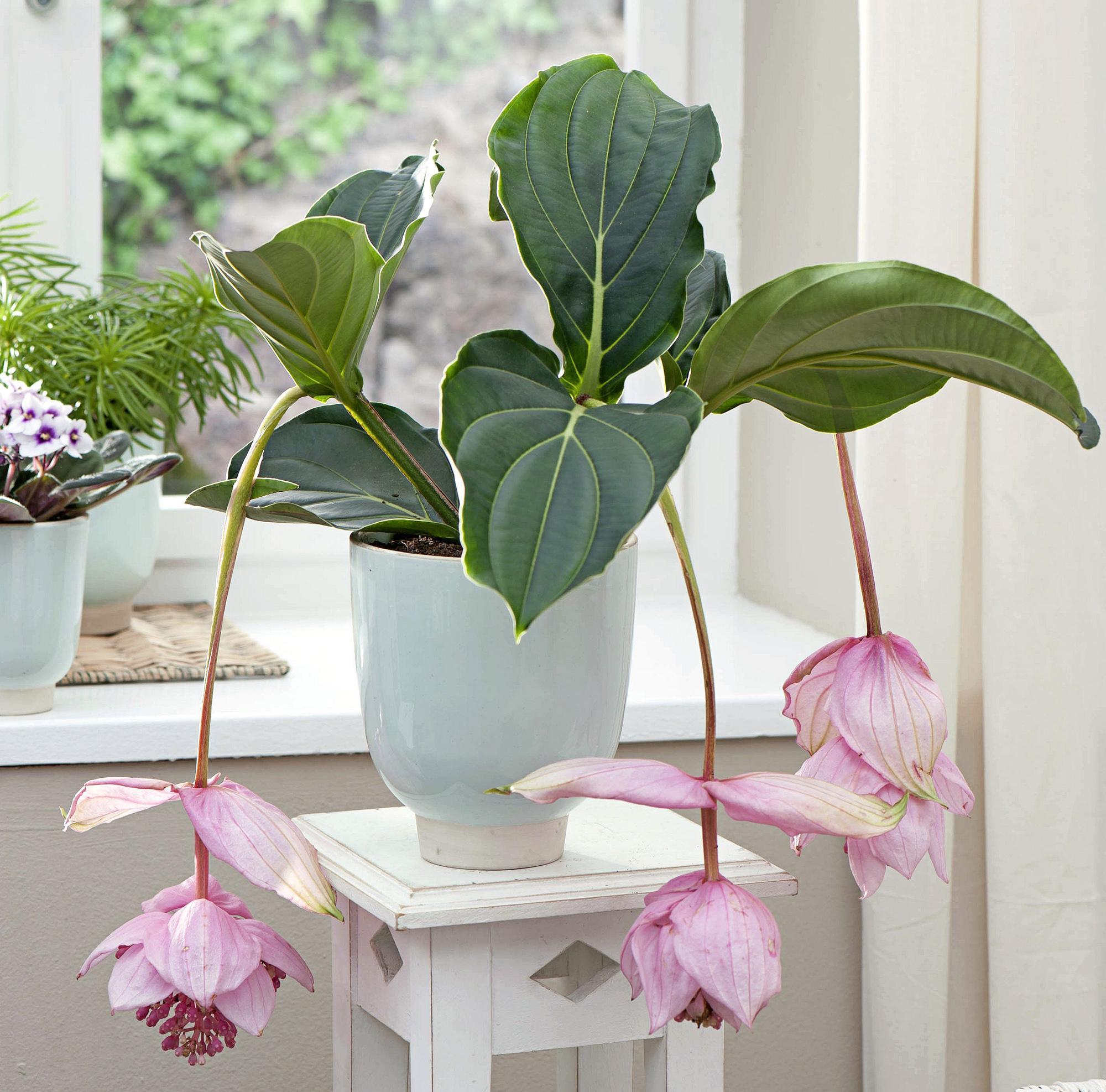 quelle plante verte pour quelle pi ce de la maison. Black Bedroom Furniture Sets. Home Design Ideas