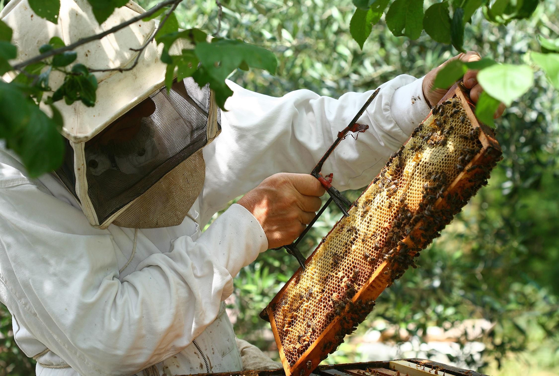 envie de ruches o s 39 initier l 39 apiculture en belgique femmes d 39 aujourd 39 hui. Black Bedroom Furniture Sets. Home Design Ideas