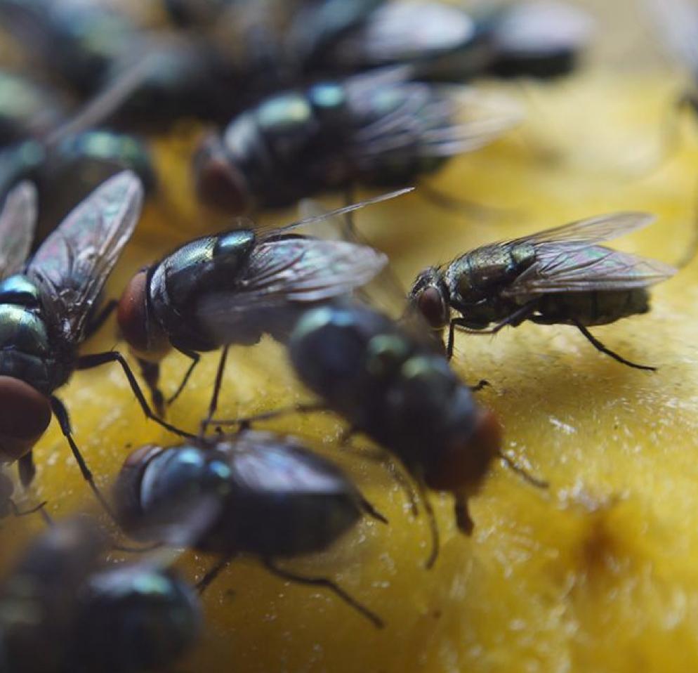 Comment Éloigner Les Mouches À L Extérieur 11 astuces pour garder les mouches à distance - femmes d