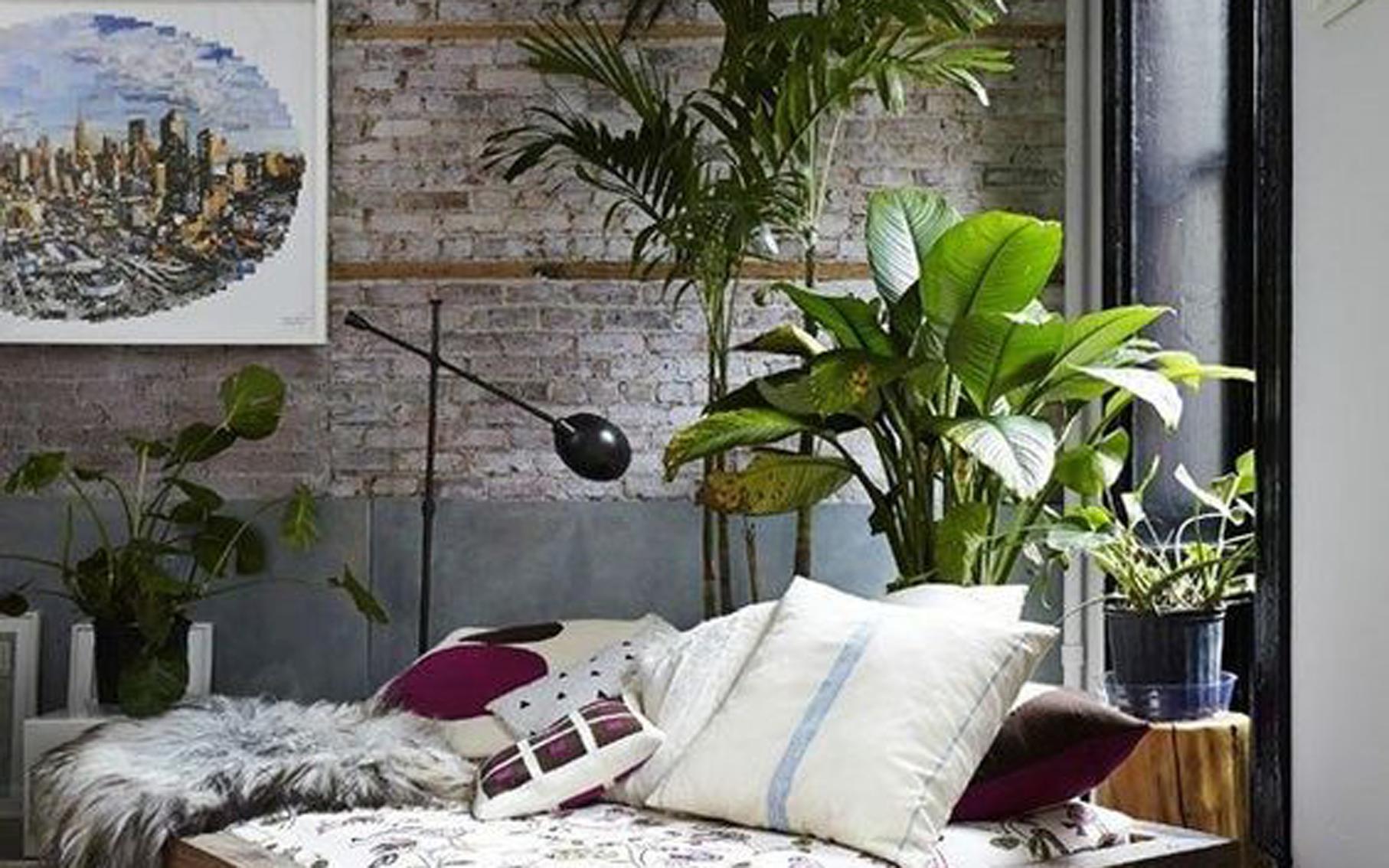 d co quelles plantes pour mon int rieur. Black Bedroom Furniture Sets. Home Design Ideas