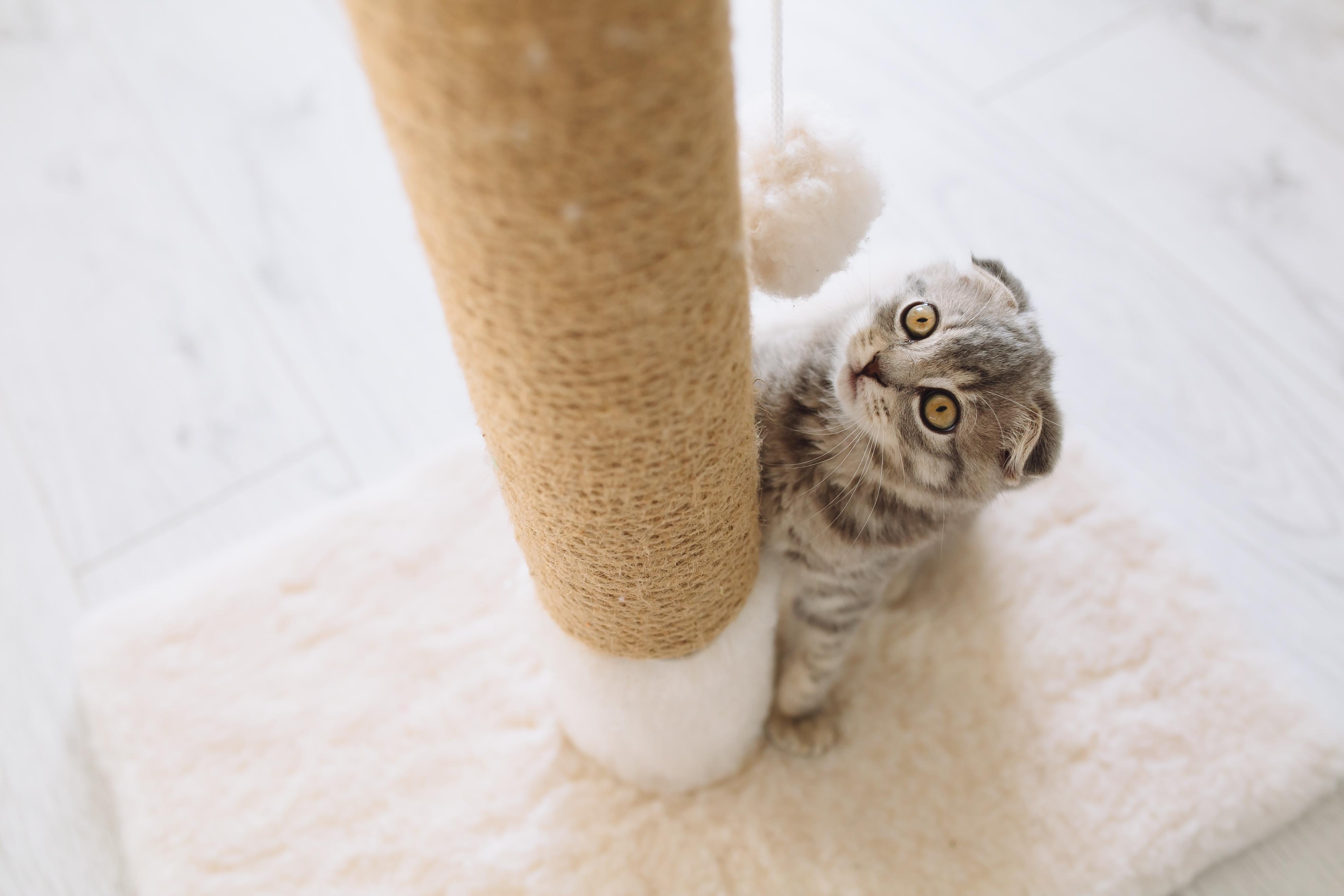 Zo Zorg Je Ervoor Dat Je Kat Nooit Meer Aan Je Meubels Krabt