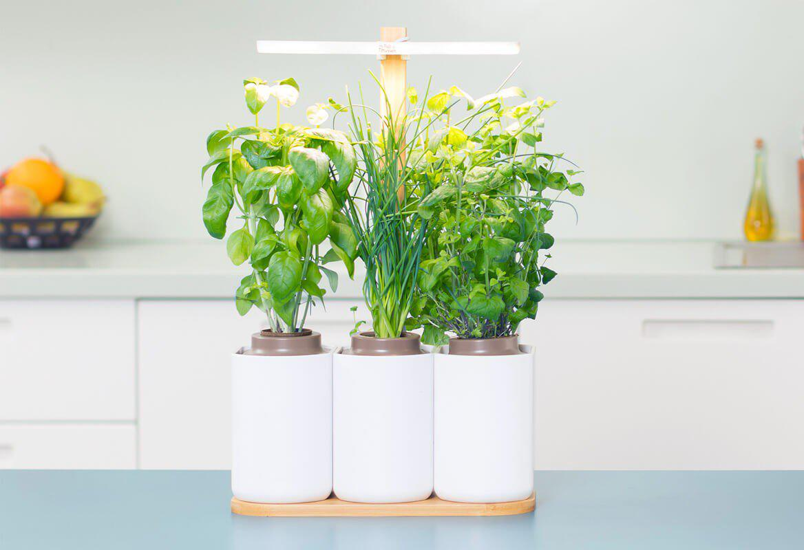 Herbes Aromatiques D Intérieur testé pour vous: lilo, le potager d'intérieur intelligent