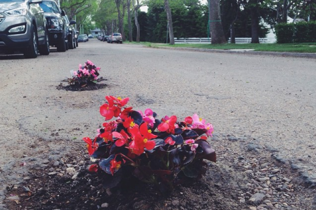 planter des fleurs dans le bitume une jolie fa on de d noncer le mauvais tat des routes. Black Bedroom Furniture Sets. Home Design Ideas