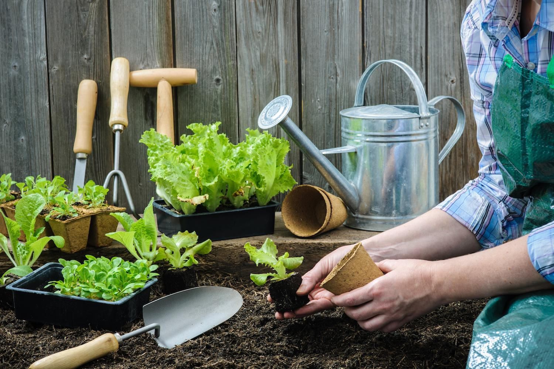 Quelle Salade Planter Maintenant semer les légumes ou les planter? - femmes d'aujourd'hui