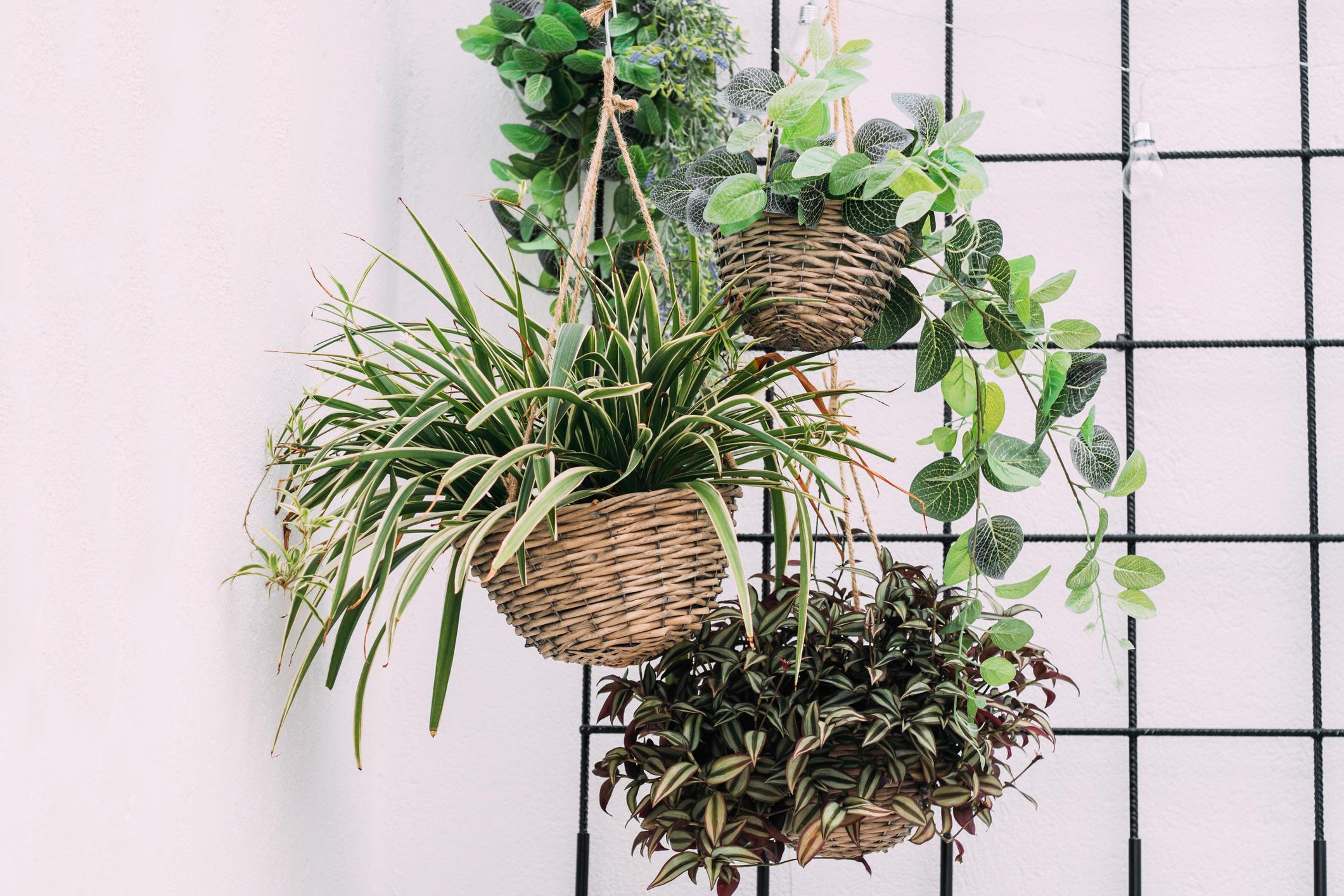 Les Filles De L Air Plante 10 plantes retombantes pour créer un rideau végétal - femmes