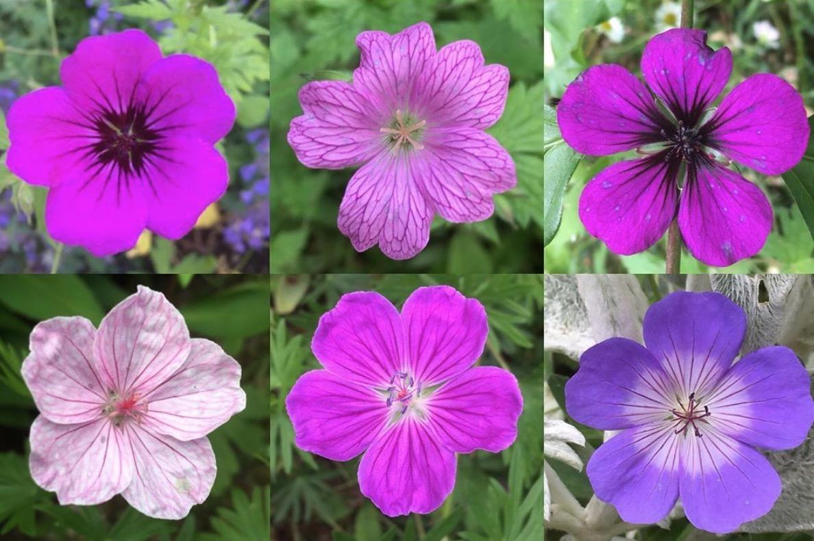 Fleurs Pour Mi Ombre 10 fleurs géniales pour l'été - femmes d'aujourd'hui