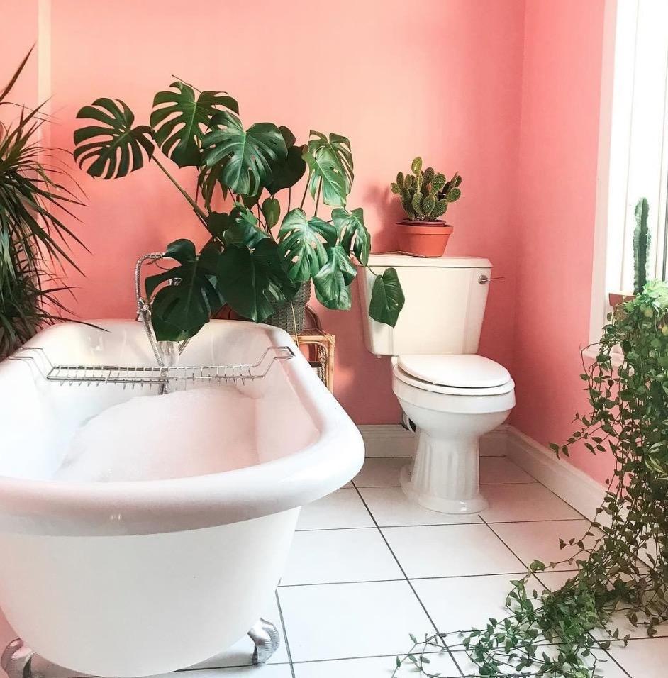 Plante D Intérieur Qui Aime La Chaleur 23 plantes vertes pour végétaliser la salle de bains