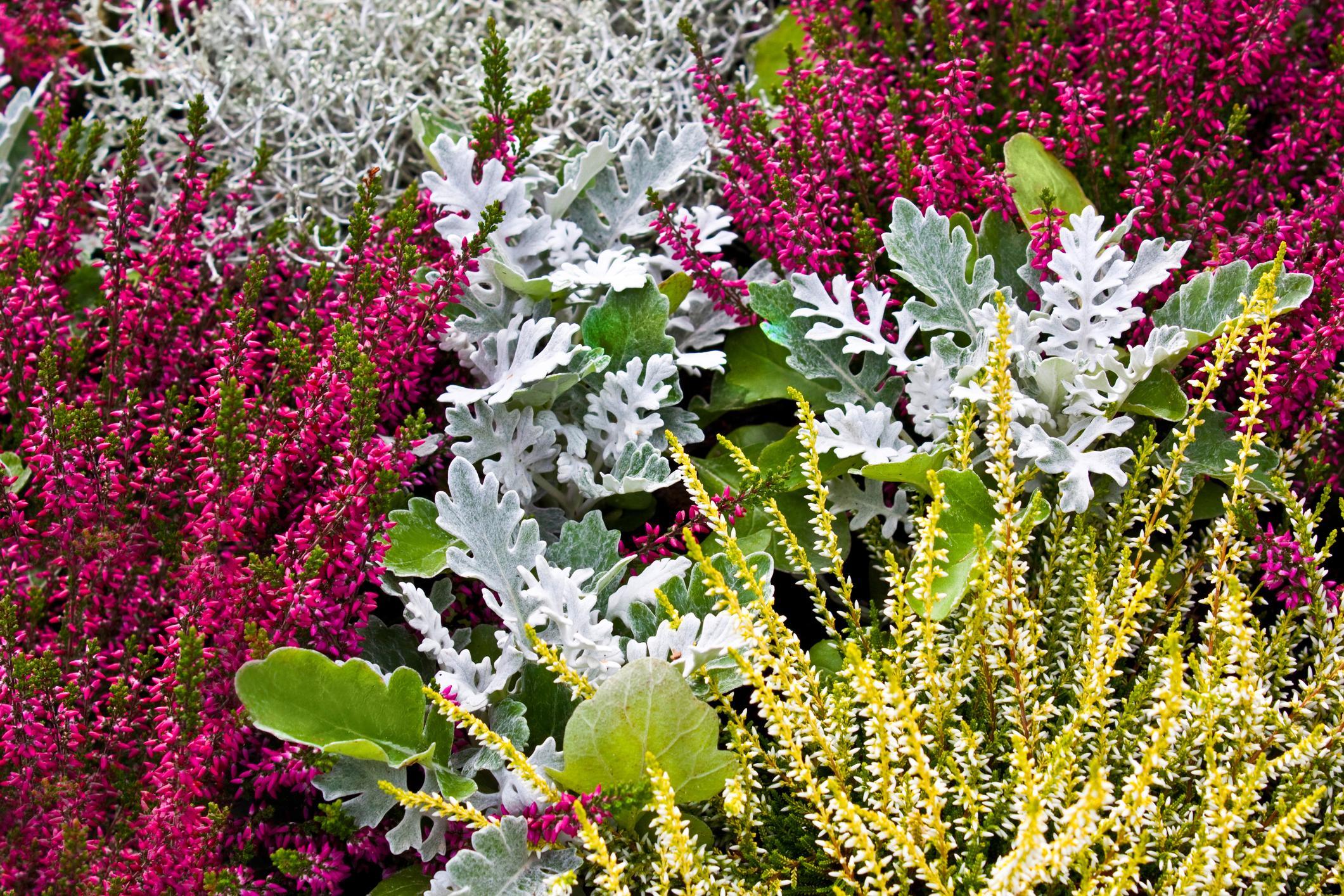 Que Mettre Avec Des Bruyeres 10 plantes à mettre sur son balcon à l'automne - femmes d