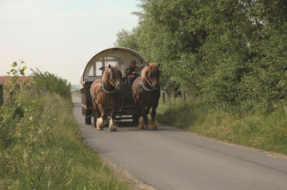 Op stap met de huifkar, voortgetrokken door twee Brabantse trekpaarden.