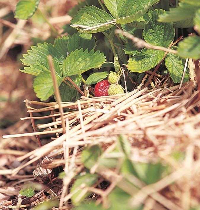 Pak de slakken in je tuin aan met onze tuinman Angelo Dorny