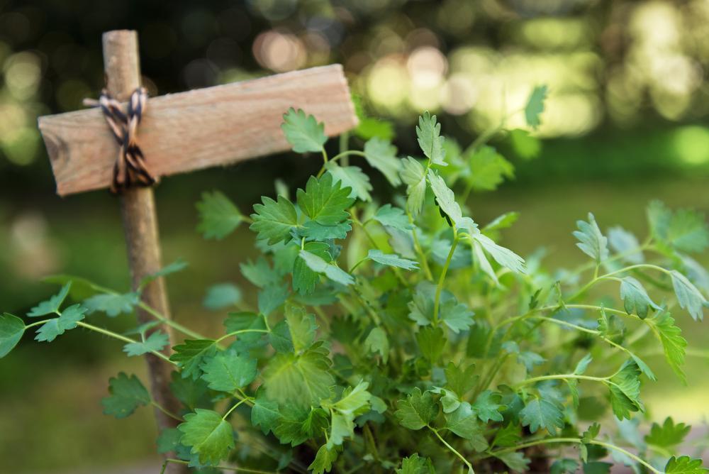 De favoriete blaadjes van onze tuinman Angelo Dorny