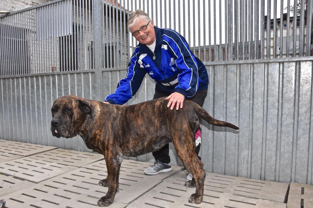 Verantwoordelijke van de Grensstreek Monique Blancke bij een van de honden.