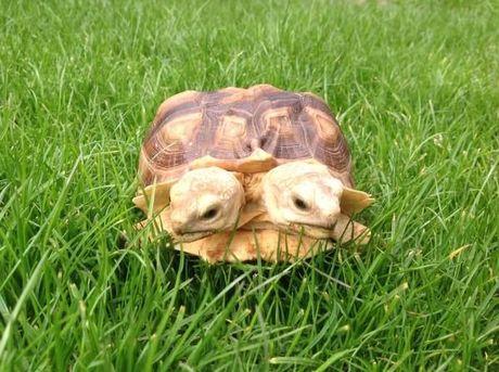 DE ARK VAN KW (13) : De schildpad die soms naar twee kanten tegelijk wil