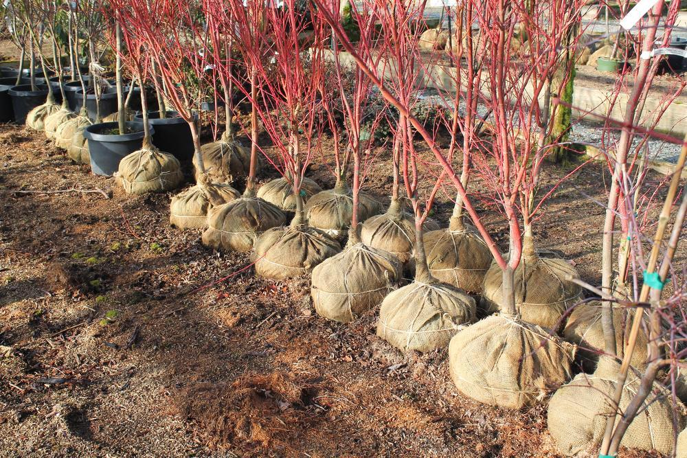 Tuin in rust kan lijden onder de droogte