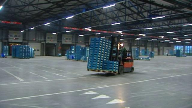Verkoop van wintergroenten loopt niet vlotjes in Reo Veiling Roeselare