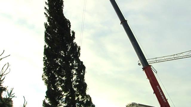 Grootste kerstboom op strand van Oostduinkerke