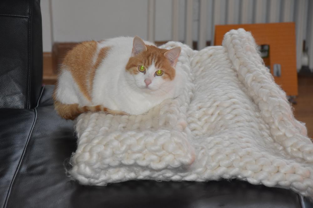 De poes Dotje op een dekentje gemaakt door Fran : huiselijke gezelligheid. (Foto LVA)