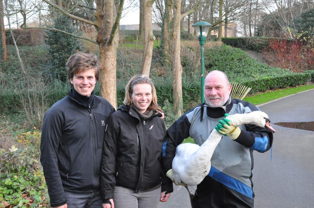 Moedige vrouw redt zwaan van verdrinking in stadspark Diksmuide