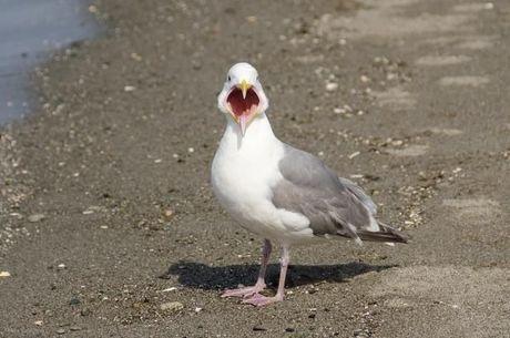 10 vogels om niet echt naar uit te kijken tijdens het vogeltelweekend