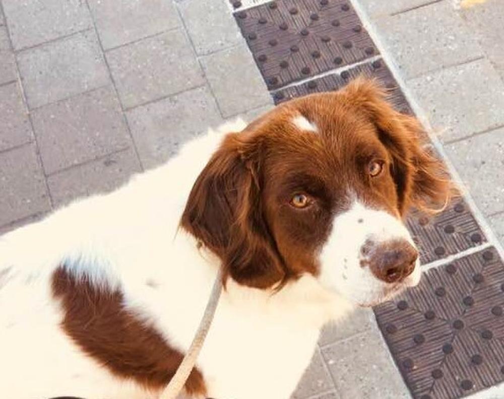 Felix' hond Castro inspireerde hem om zijn droom na te jagen: een eigen hondenhotel openen.