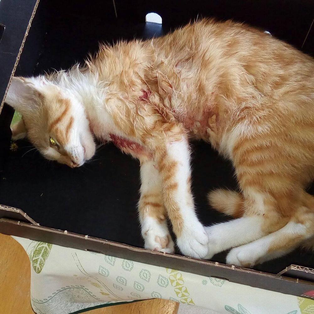Loslopende hond bijt jong katje dood op plein in Roeselare