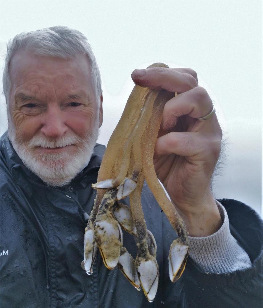 Eric Vandewalle toont de vreemde zeeschepsels.