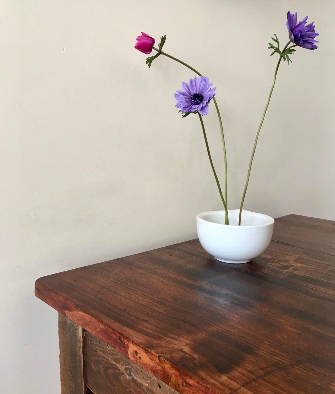 Decoratieve anemonen.