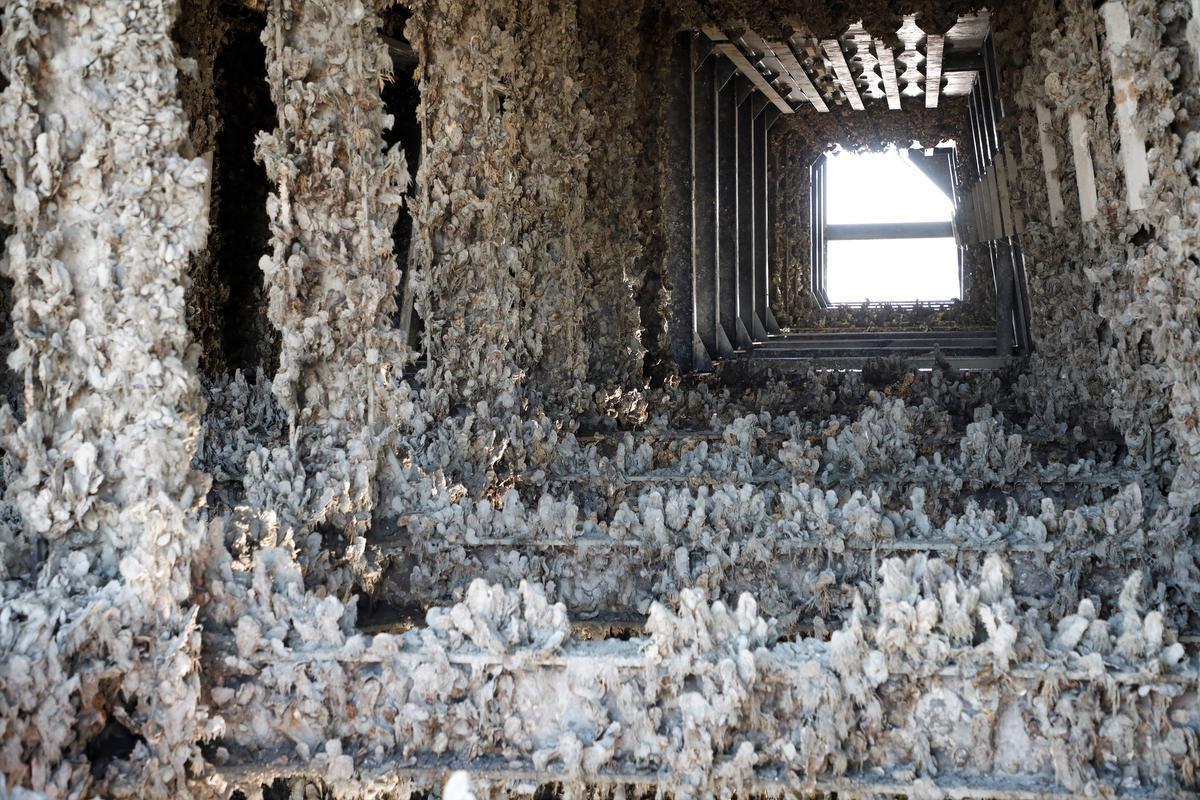 In het binnenste van de sluisdeur bevinden zich ook duizenden oesters.