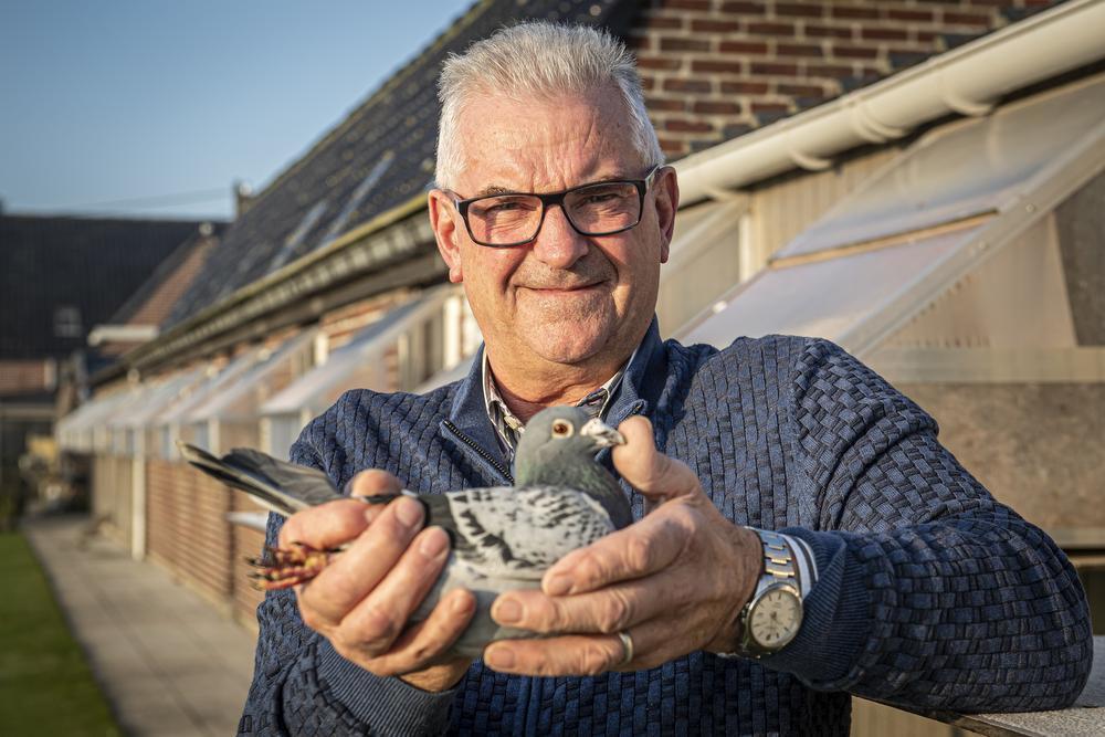 Hoe Joël Verschoot de Eddy Merckx van de duivensport werd: