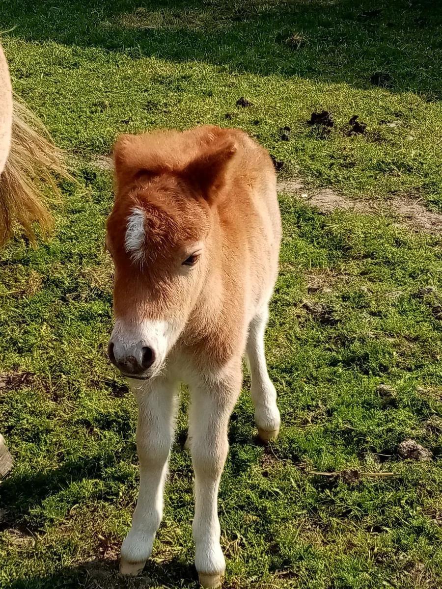 Het veulentje werd op 15 mei geboren.