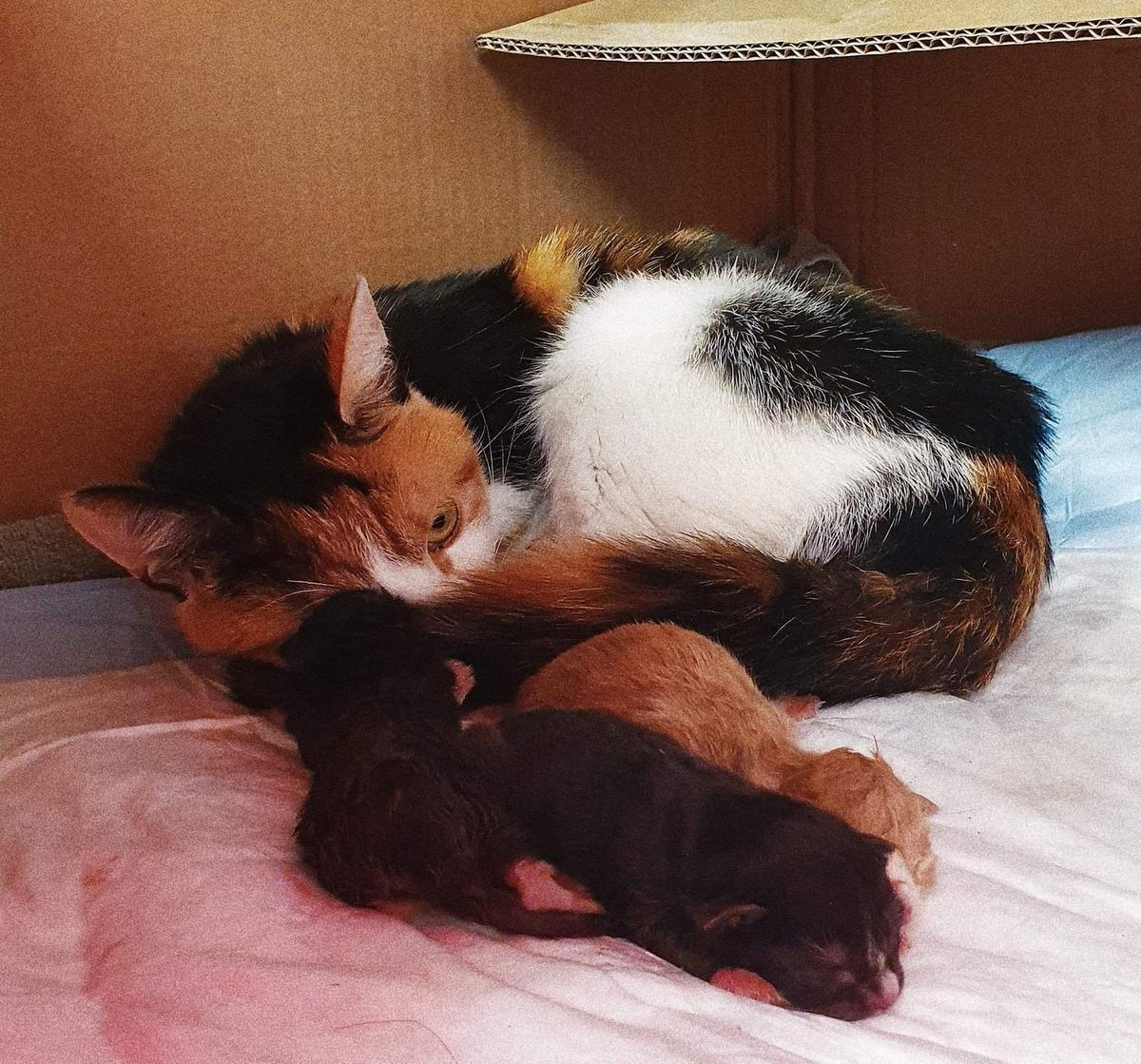 De moederpoes werd verenigd met kittens.