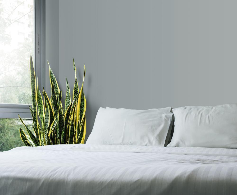 Een plant voor elke kamer