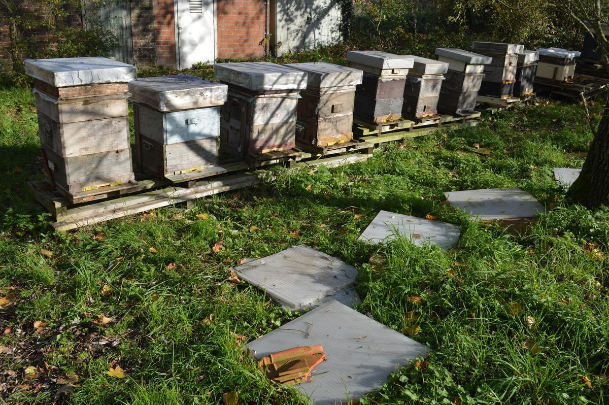 De bijenkasten werden al wat opgelapt maar volgens de imker zullen er nog veel bijen sterven.