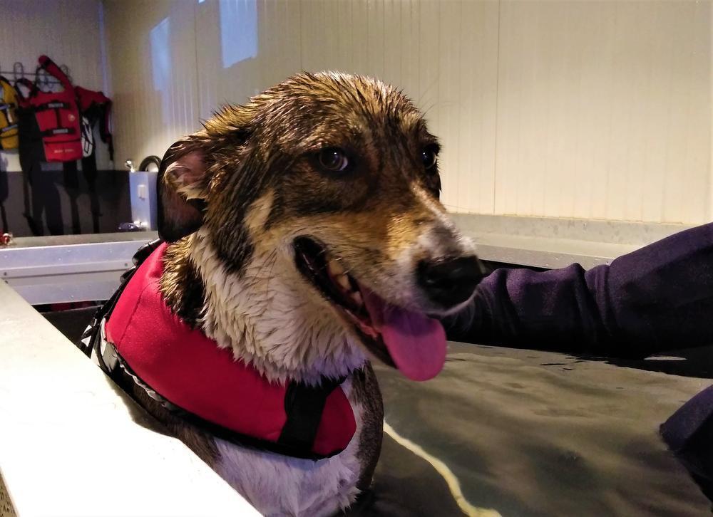 Veel Kortrijkzanen trekken bij gebrek aan een zwemvijver met hun hond naar Kuurne. Hondenspeciaalzaak Dog Lovers baat daar een binnenzwembad voor honden uit.