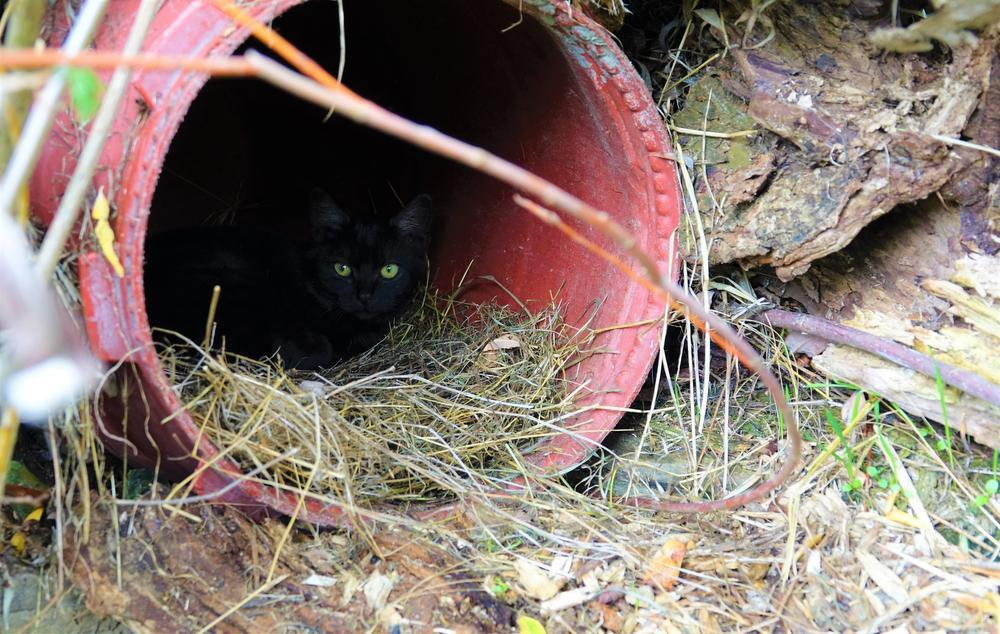 Vroeger sliepen de katten in geïmproviseerde schuilplaatsen.