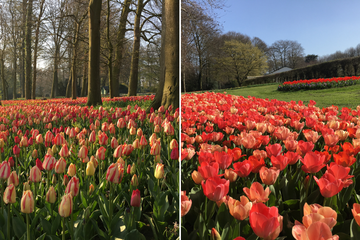 Floralia Brussels: le parc où se balader à travers les tulipes