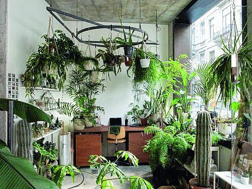 plantenwinkels brussel