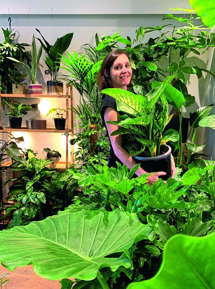 planten store gent