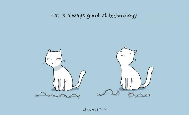 Le chat s'y connait en technologies