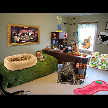 Je kamer is van de hond