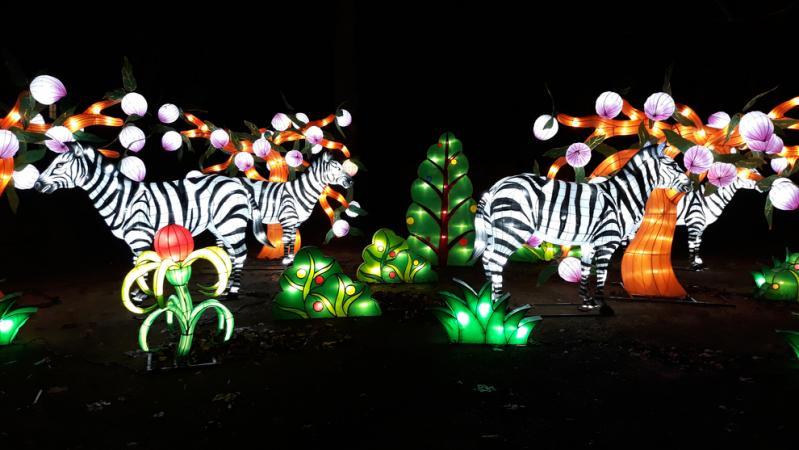 Admirer l'art chinois des illuminations pendant China Light ZOO