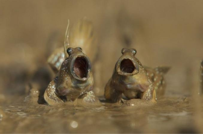 © Daniel Trim/Comedy Wildlife Photo Awards