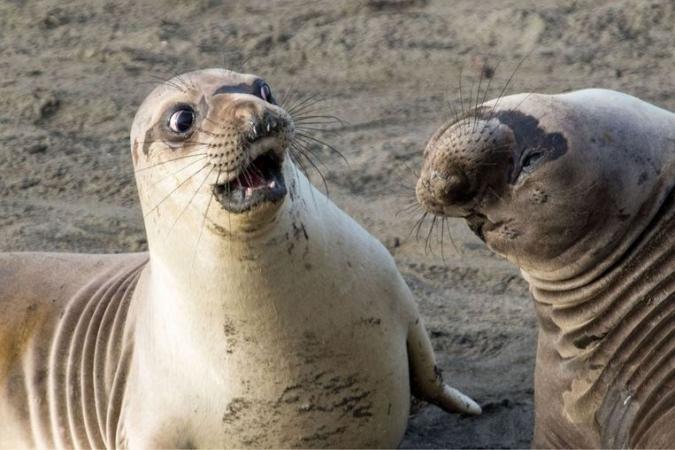 © George Cathcart/Comedy Wildlife Photo Awards